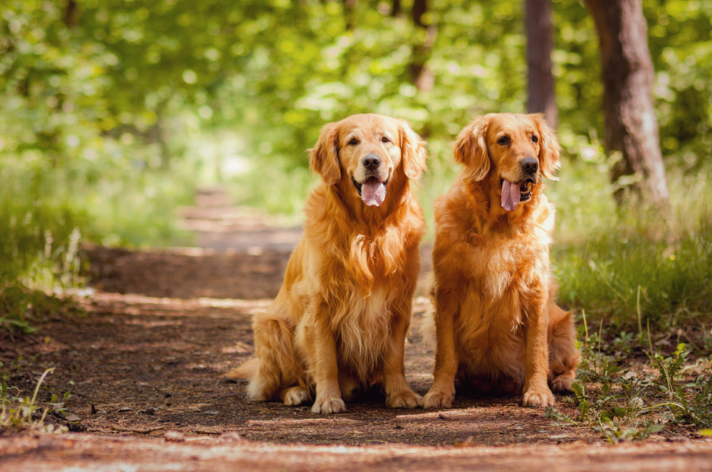 Two dogs sitting on a hiking trail in Greensboro.